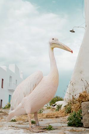 mtykonos-beach-wedding-destinations