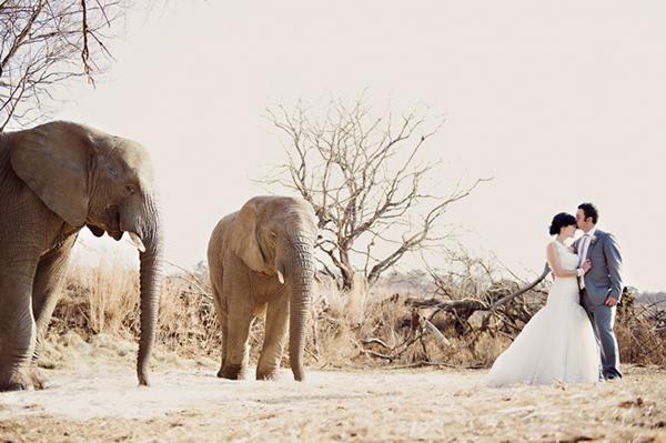 Safari-Wedding-Africa