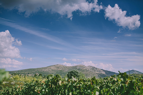 winery-wedding (2)